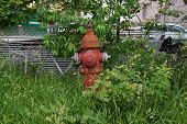 image of weed  - A fire hydrant among weeds and tall grass - JPG
