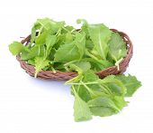 stock photo of bamboo leaves  - Group of brassica juncea leaves in bamboo basket on white - JPG