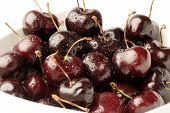 Black Cherrys