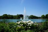 picture of illinois  - White flowers blooming in front of the Theodore Roosevelt Fountain in Brookfield, Illinois ** Note: Soft Focus at 100%, best at smaller sizes - JPG
