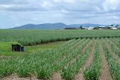 Queensland Sugar Cane Farm