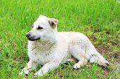 pic of stray dog  - White stray dog over green grass background - JPG