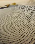 Sand Dunas And Plant