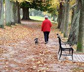 Walking The Dog