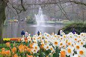 dutch garden in spring
