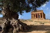 temple, concordia, agrigento, valley, sicily, italy