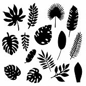 Palm Leaves Silhouettes Set Isolated On White Background. Tropical Leaf Silhouette Elements Set Isol poster