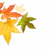 pic of fall leaves  - Photo of Colorful Autumn leaves over white background - JPG