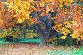 Autumn Scene In The Park.