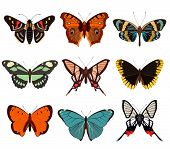 Realistic Butterfly And Moth Collection Isolated On White Background Vector Illustration. Colorful C poster