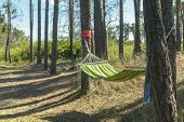 Relaxing Lazy Time With Color Hammock In The Green Forest. Beautiful Landscape With Swinging Hammock poster