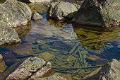 Algal Slurry At The Top Of A Stagnant Pond