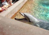 Feeding The Dolphin