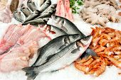 Different Kinds Of Fish On Market Display poster