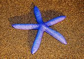 pic of camiguin  - A Star Fish on a beach in Philippines - JPG