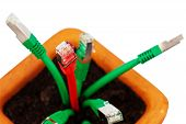 Cable network in flower pot