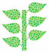 Flora Plant Collage Of Filled Circles In Various Sizes And Green Color Tints. Vector Round Dots Are  poster