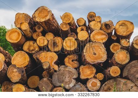 poster of Stack Of Logs. Natural Wooden Background With Timber. Log Wall. Pile Of Timber