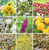 A set of spring blossom flowers: nine pictures in one