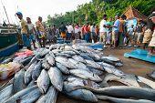 MIRISSA, SRI LANKA - APRIL 10: Fishermen returned to their work in Mirissa, Sri Lanka on April 10, 2012. In 2008 USAID finalize a $12.7 million repair of fishing harbor affected by tsunami in Mirissa.