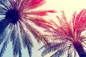 Palm Trees Against Blue Sky, Palm Trees At Tropical Coast, Vintage Toned And Stylized, Coconut Tree, poster