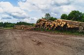 Wooden Logs In The Forest. Chopped Tree Logs Stack. Nature Landscape poster