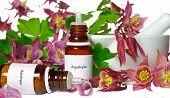 Aquilegia For Homeopathy