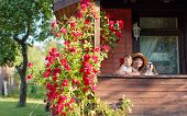 Granddaughter, Grandmother And Their Dog On The Veranda Of The Village House. Sunny Summer Evening I poster