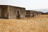 Ruined Houses In Wheat Field