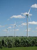 Windmils Above The Corn Field