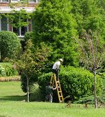 Landscapers Working On The Plantation