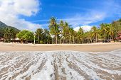 Empty Tropical Beach With Coconut Palms