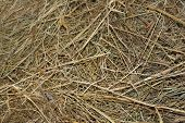 Texture Of Dry Grass, Background Of Dry Grass, Wallpaper With Texture Of Dry Grass poster