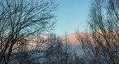 Beautiful Landscape With White Birches. Birch Trees In Bright Sunshine. Birch Grove In Autumn. The T poster