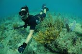 pic of spearfishing  - Man freediving with speargun in an underwater seascape - JPG