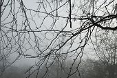 Foggy Weather. Autumn Park In The Fog. Blurred Background. Morning Fog In The Park. poster