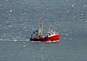Flock of seagulls surrounding fishing trawler boat in ocean.