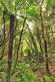 The New Zealand native bush