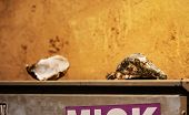 Unexpected Leftover Open Empty Oyster Shells On Electricity Box On Yellow Wall Background poster