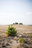 Small Bush In The Desert