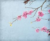 pic of judas tree  - old paper with the image of a blossoming branch - JPG