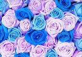 Постер, плакат: Подробные фото свадебный букет из цветных синие и фиолетовые розы