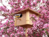 Birdhouse In Pink Blossoming Garden