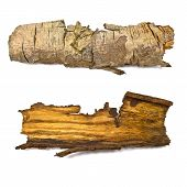 Close-up Of Isolated Broken Stub Log Bark With Wooden Texture Isolated On White Background