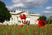 Poppy Seed Field In Front Of The Fridericianum In Kassel