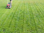 Homem cortando a grama com o cortador de grama