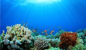 Coral Reef Underwater in Ocean