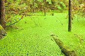 Regenwoud wetland wildernis van West Coast v.Chr.