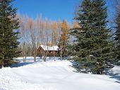 Winter tree scenic