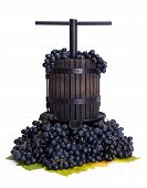 picture of wine-press  - Traditional manual grape pressing utensil in a blue grape bunch - JPG